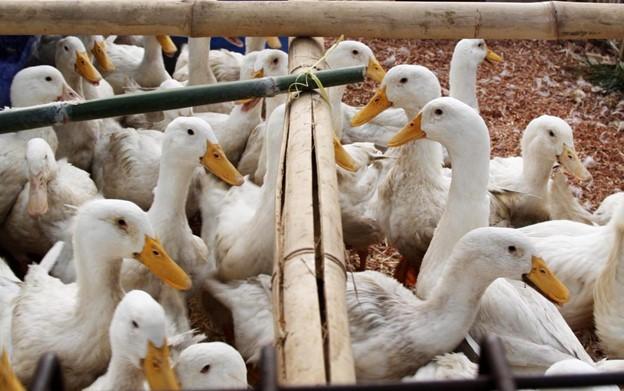 6 Macam Hewan Ternak Yang Menguntungkan Bisnis Peternakan